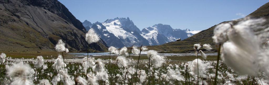 photo d'un paysage d'un glacier avec lac en premier plan